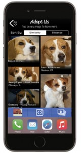 LikeThat-Pets