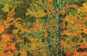 Nikon-FallFoliage-by-Rod-Planck