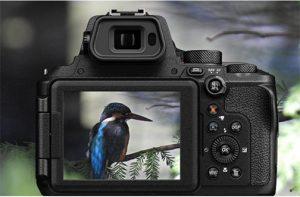 Nikon-Coolpix-P950-macro