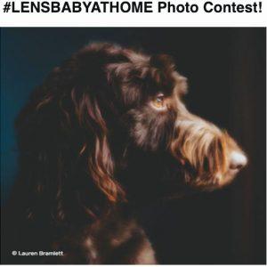 Lensbaby-Photo-Contest
