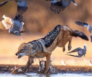 Africa in Focus Olympus-Wilderness-Safari-2