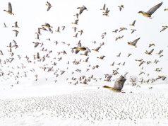 Drone-Photo-Award-2021-Terge-Kolaas