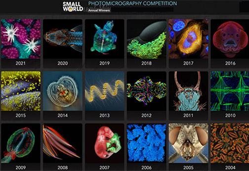 Nikon-Small-World-Contest-2021