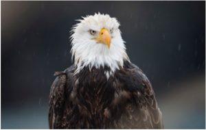 Eagle-Mike-Dart